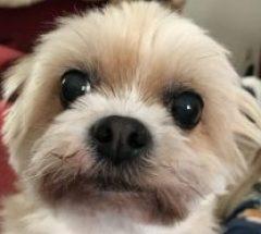 Bossy Little Dog